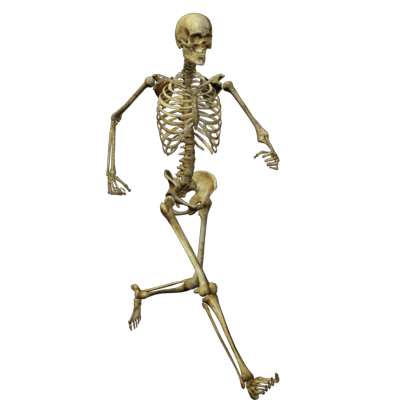 Skeleton Free Cut Out