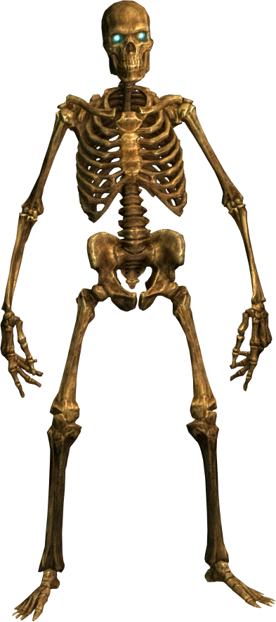 Skeleton Human Png