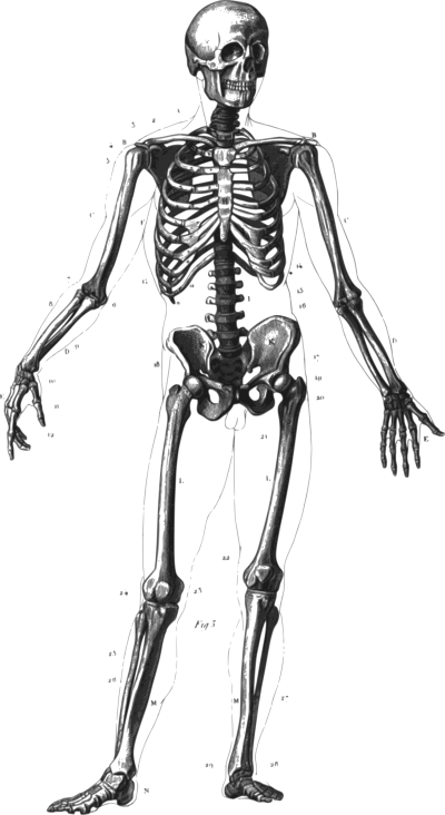 download skeleton free png transparent image and clipart