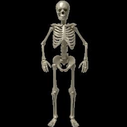 Human Skeleton Hd Image Transparentpng