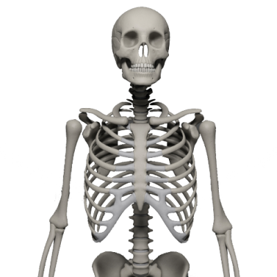 Skeleton Free Cut Out 33 PNG Images
