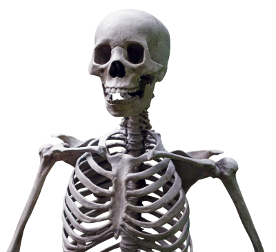 Skull High Quality PNG PNG Images