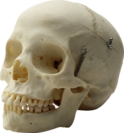Skull Free Download PNG Images