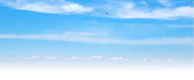 Sky HD Picture Wallpapers, Flying Bird, Visuality PNG Images