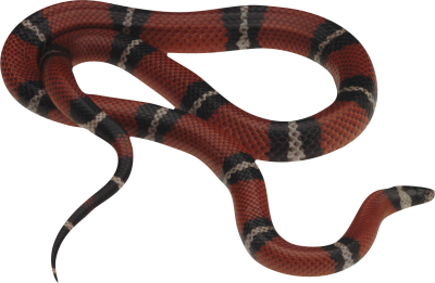 Snake Clipart Photo