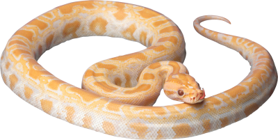 Snake Clipart Photos 10 PNG Images