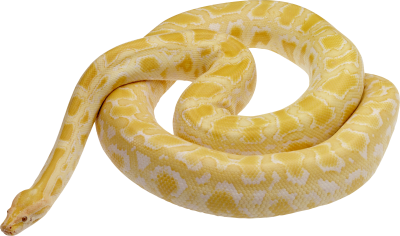 Snake Clipart Photo 8
