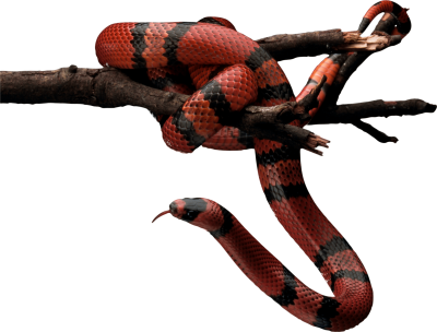 Snake Free Download PNG Images
