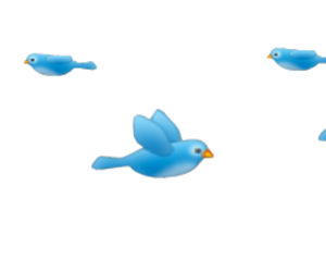Bird, Flying, Blue, Images About Snapchat Filters Png PNG Images