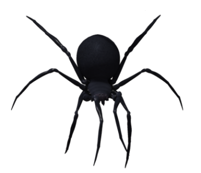 Spider Picture, Black, Tarantula PNG Images