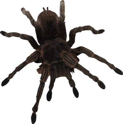 Big Dangerous Spider PNG Images