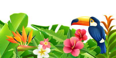 Flowers And Parrots Summer Clipart images Free Download PNG Images