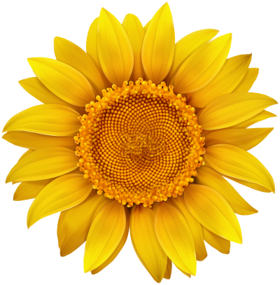 High Quality Digital Sunflower Picture Png PNG Images