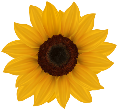 Orange Leafy Sunflower image Transparent PNG Images