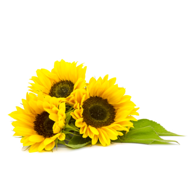 Organic Sunflower Oil Clipart Png images PNG Images