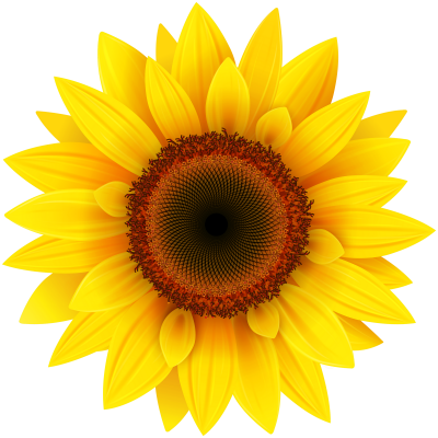 Sunflower Design images Free PNG Images