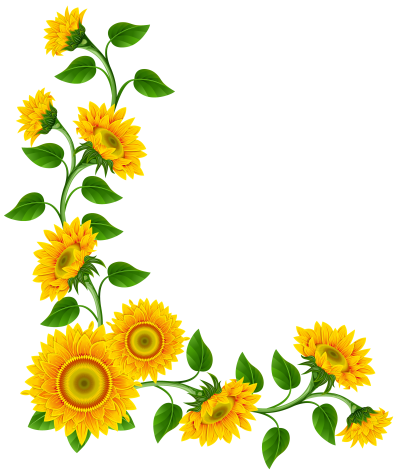Sunflowers Picture PNG Images