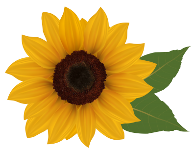 Sunflowers Background PNG Images