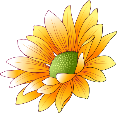 Sunflowers Transparent Image PNG Images