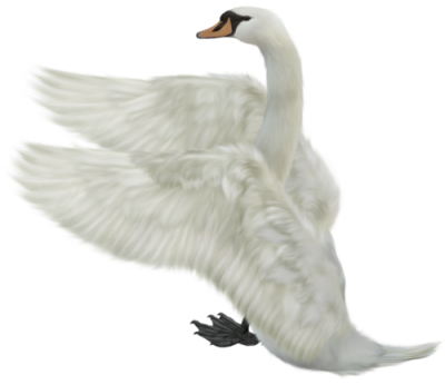 Flying Swan Png PNG Images