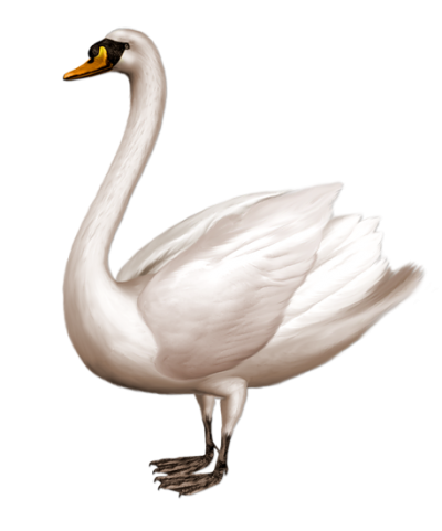 Metal Swan Png Images PNG Images