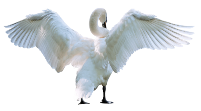 New Swan Png image PNG Images