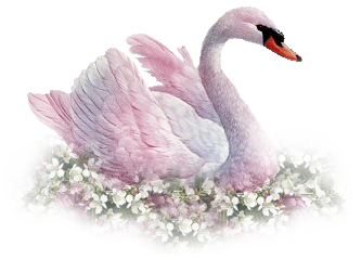 Seat Swan Png Transparent Images   PNG Images