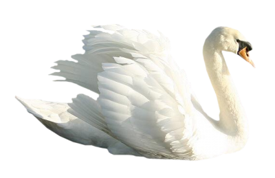 Stance Swan Png Images PNG Images