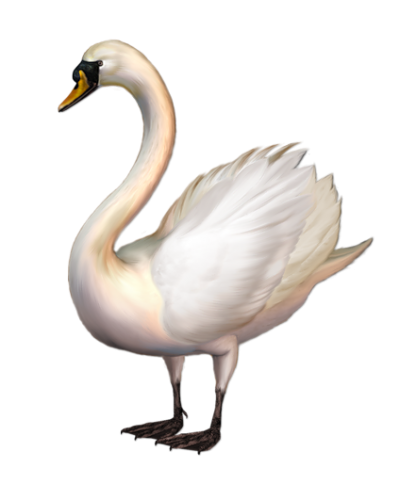 Swan Clipart Images