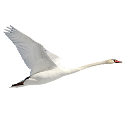 Swan Energy Pictures PNG Images