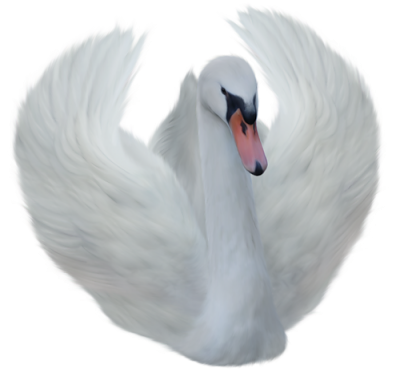 Swan Pictures PNG Images