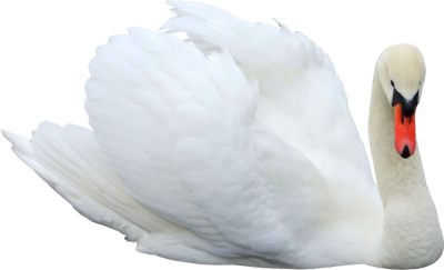Swan Png Pictures PNG Images