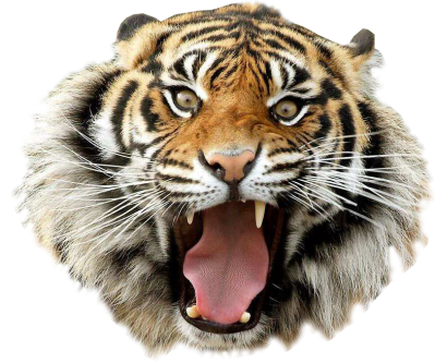 Angry Tiger Transparent Pictures