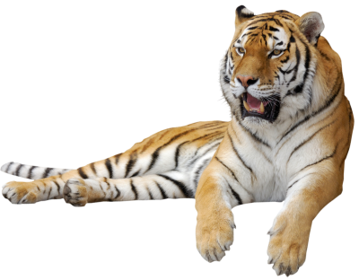 Tiger Png Clipart Picture Images