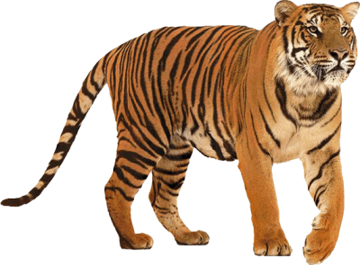 Mighty Tiger Clipart PNG Images