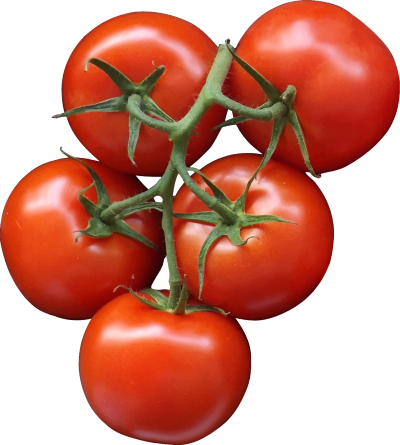 Tomatos Clipart PNG Images