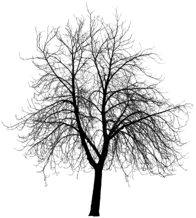 HD Tree Silhouette Photo Png