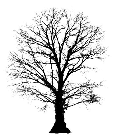 Tree Silhouette Amazing Image Download