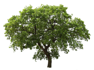 Green Tree Png Images, Pictures, Download