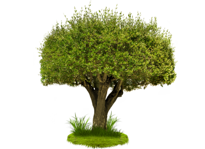 Hd Green Tree Png Image