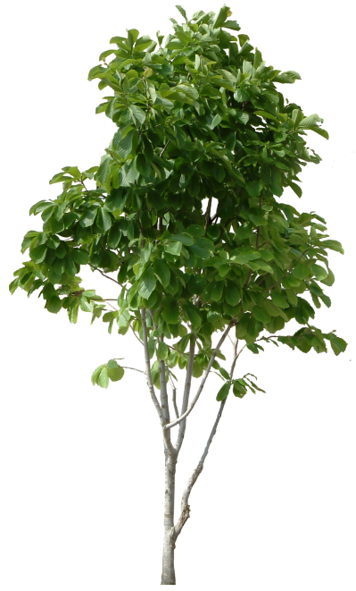 Hd Tree Png Cool Tree Image