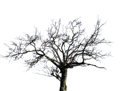 Leafless Tree Png Images PNG Images
