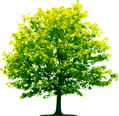 Nature Tree Png Image