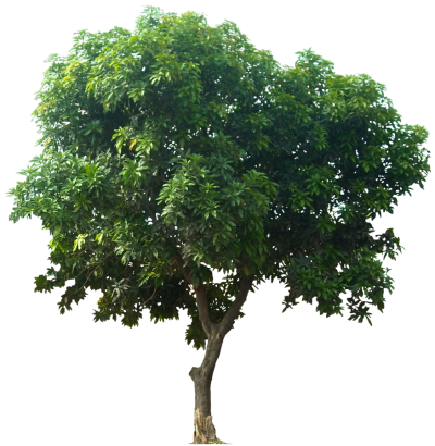 Plant Tree Png
