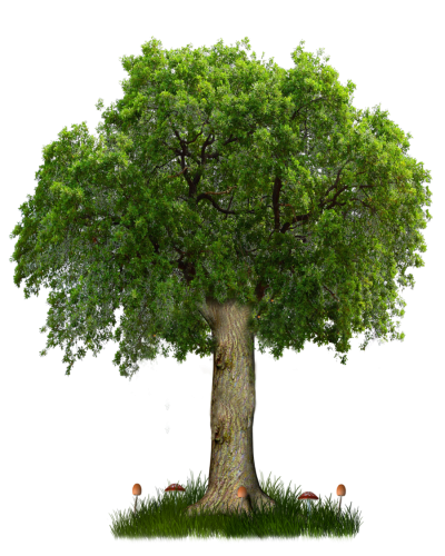 Png Tree Clipart PNG Images