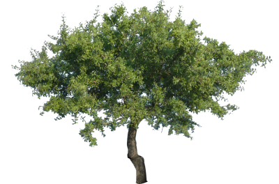 Tree Photo Png
