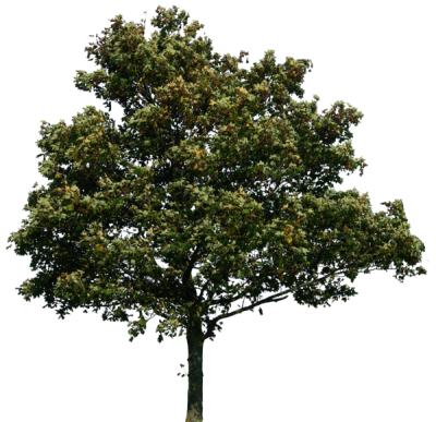 Tree Png Clipart PNG Images