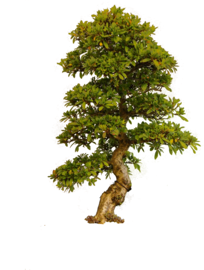 Tree Png Photo PNG Images