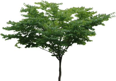Tree Png Transparent Image