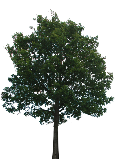 Tree With Transparency Png PNG Images